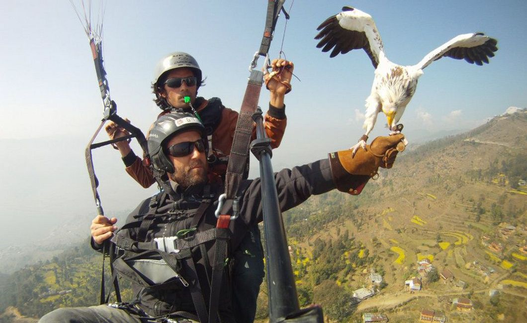 Parahawking The Flight everyone talks about